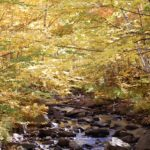 Scenic autumn foliage along a wooded stream.