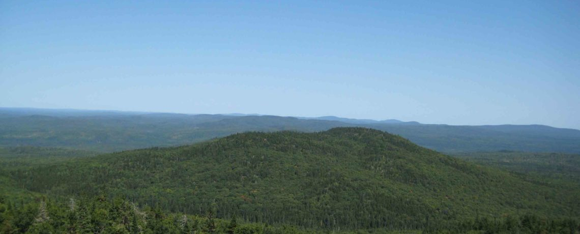Maine's Forests – Part of a New Future