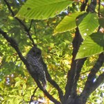 PA040004-owl-lightened-web
