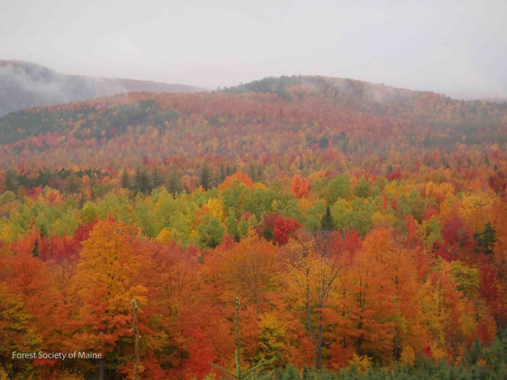 Fall foliage at its peak on the Boundary Headwaters conserved lands.