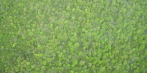 Aerial view of West Branch forestland in the spring