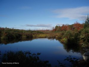 An autumn photo taken by FSM staff while documenting the wetlands and other ecological features of the project area.
