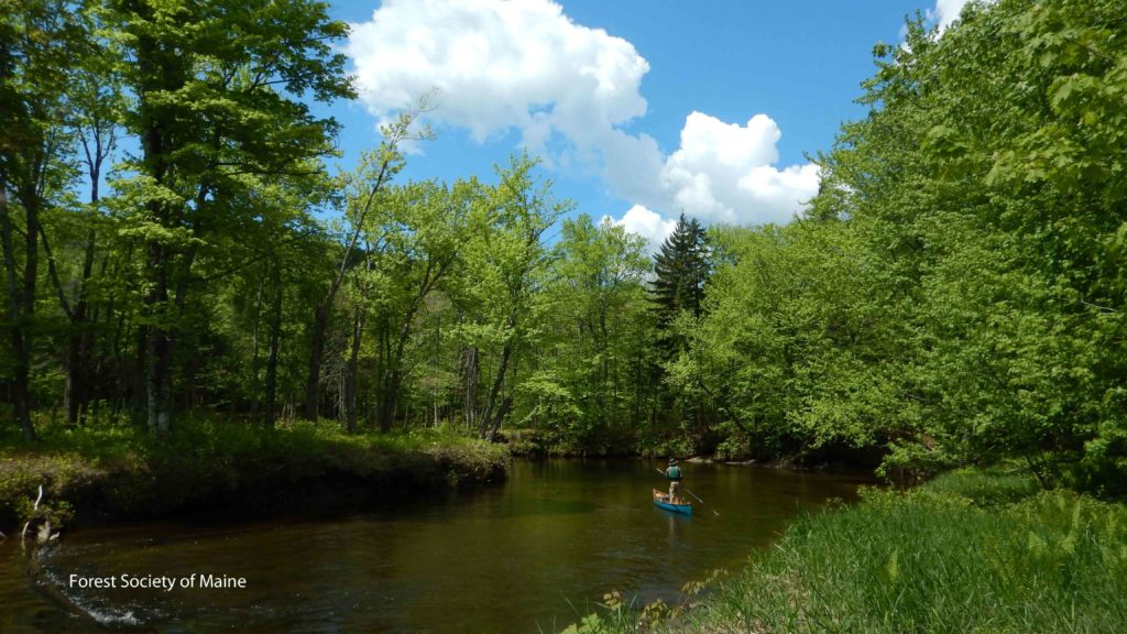 Poling on the West Branch of the Pleasant River, May 2014.