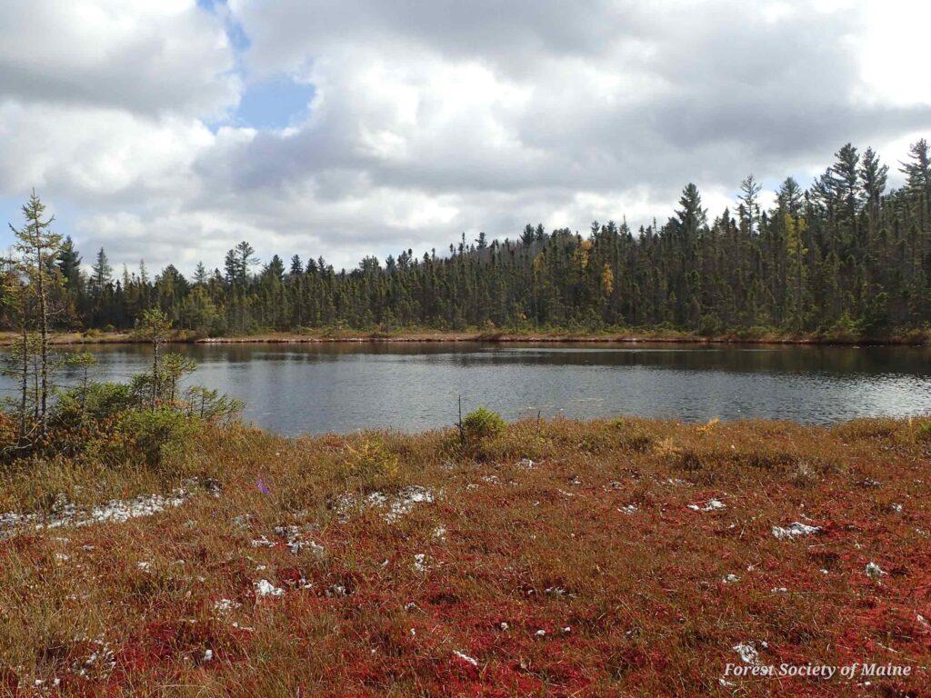 A bog in Coburn Gore in western Maine.
