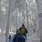 Two people snowshoe uphill through snow-covered trees.